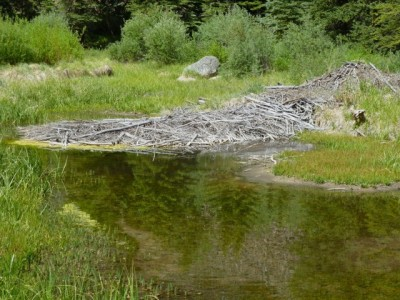 A beaver pond off of the main Castle Creek channel in the area of the potential Castle Creek Reservoir.
