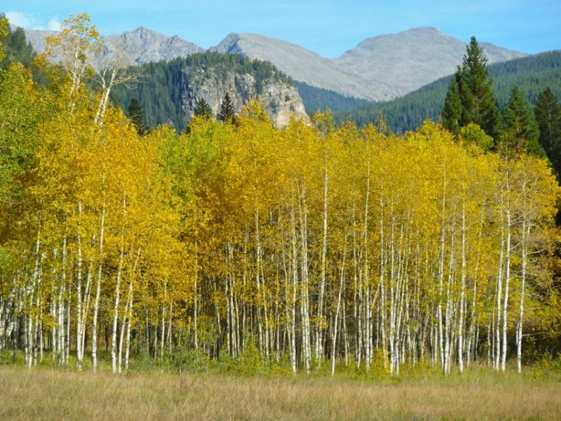 Fall colors in the Hunter Creek valley, widely appreciated as Aspen's backyard.