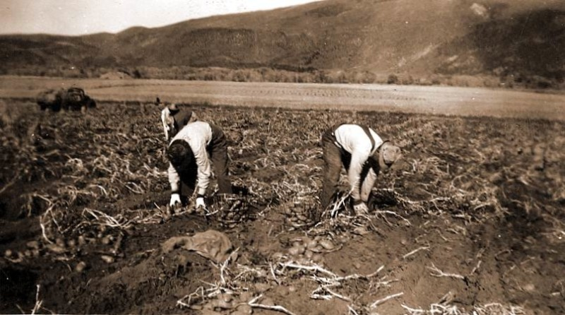 The Glassier Ranch, seen in this historic photograph of potato harvesting, has been a productive farm for over a century. It is now public open space, on which a management plan will be launched next week.