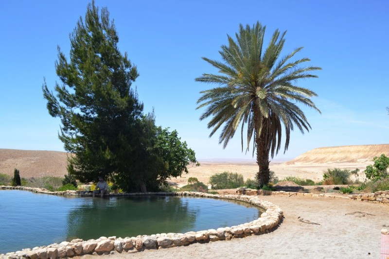 At Kibbutz Neot Smadar a cool swimming pond is a stark reminder of the importance of water to an otherwise dry landscape.