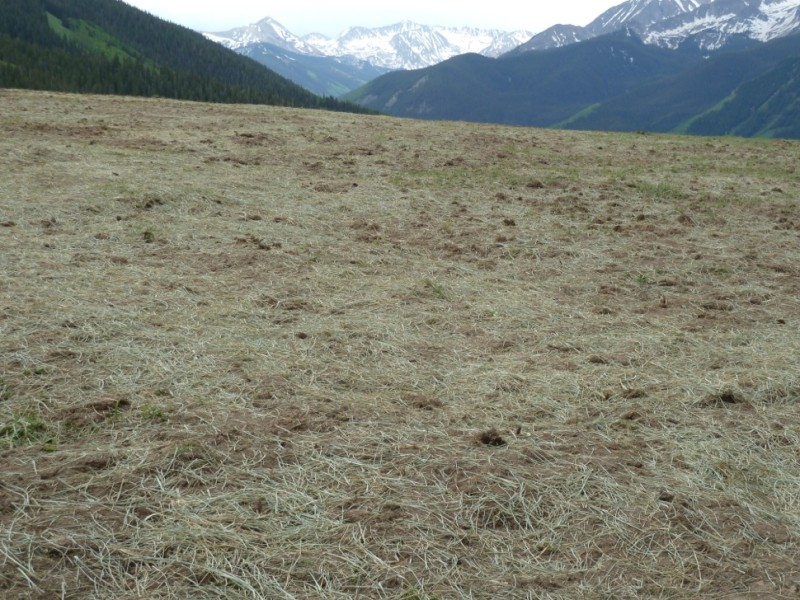 The area of the Little Annie meadow on June 23 after the removal of wedding structures used the night of June 14. When the structures had been dismantled and the site cleared, heavy equipment was used to loosen the compacted soil before seed was planted and then hand-raked in, according to a project manager on site.