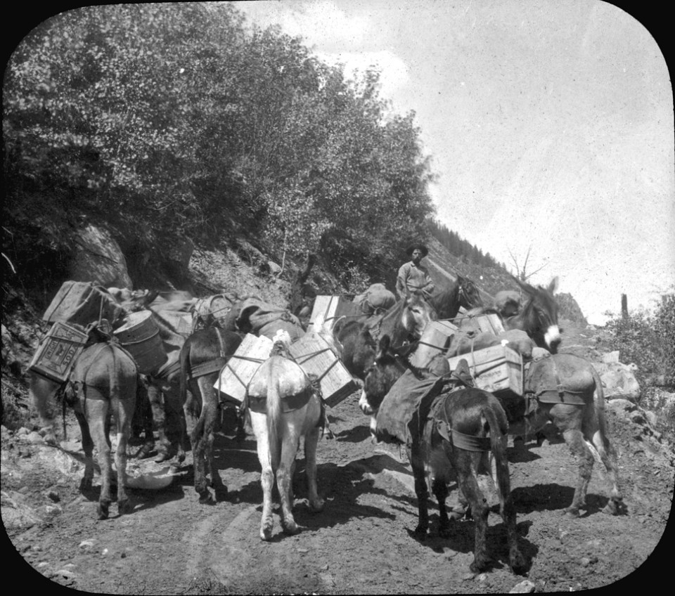 A jack puncher leads loaded burro train up Aspen Mountain, circa 1882-1890. A wooden crate has a Dwight's Soda label.