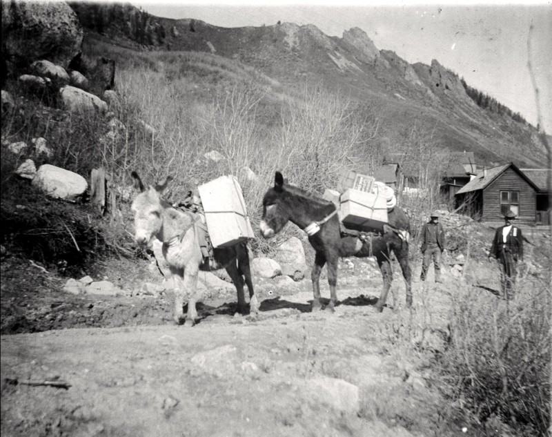 Burros, and their loads, on lower Aspen Mountain.