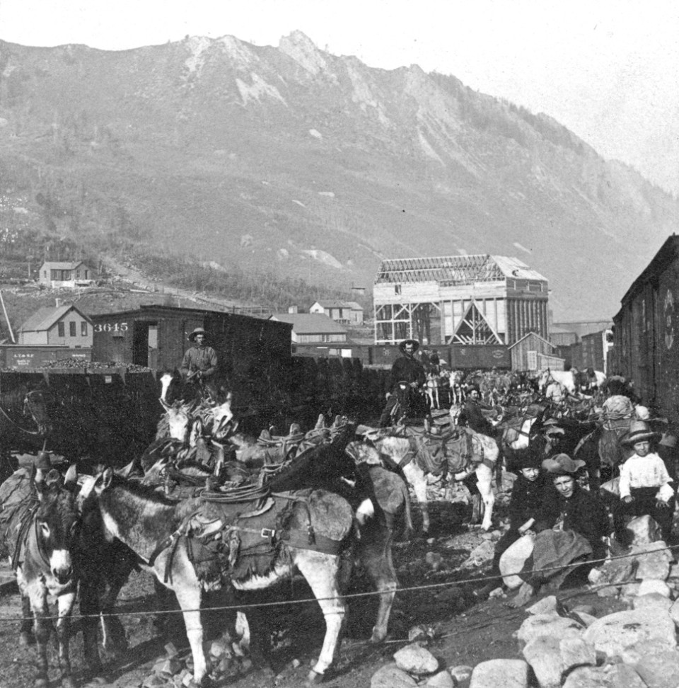 "Burros wearing pack saddles ready to load for trip up Aspen Mountain. Background shows Midland Railway cars near or under new construction of early 1890 Public Tram base-terminal ""tippler,"" or Aspen Mining & Sampler bin near base of today's Little Nell."