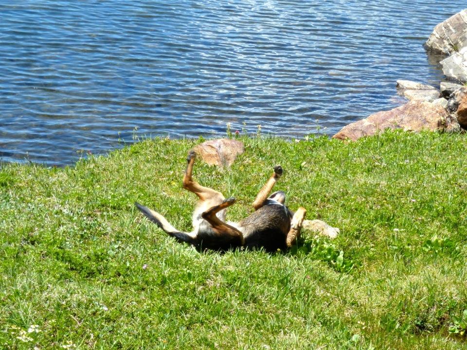 Enjoying a recreational experience on grass.