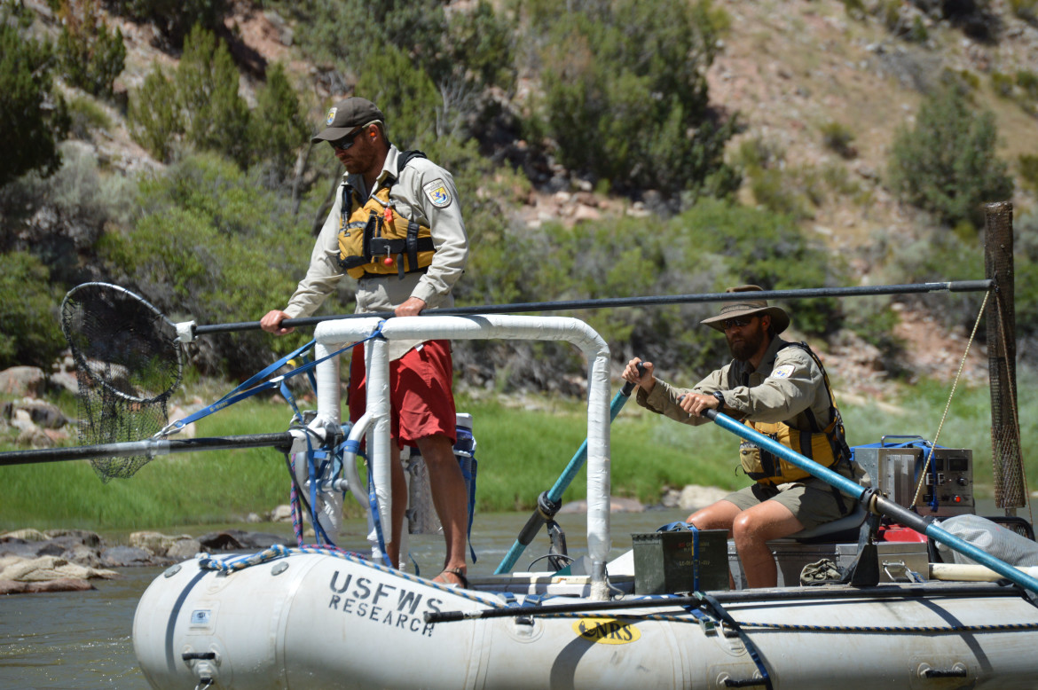 Personnel from U.S. Fish and Wildlife Service electrofishing on the Colorado River. The results from monitoring  fish populations on the Colorado between Rifle and Lake Powell is now of regional interest.