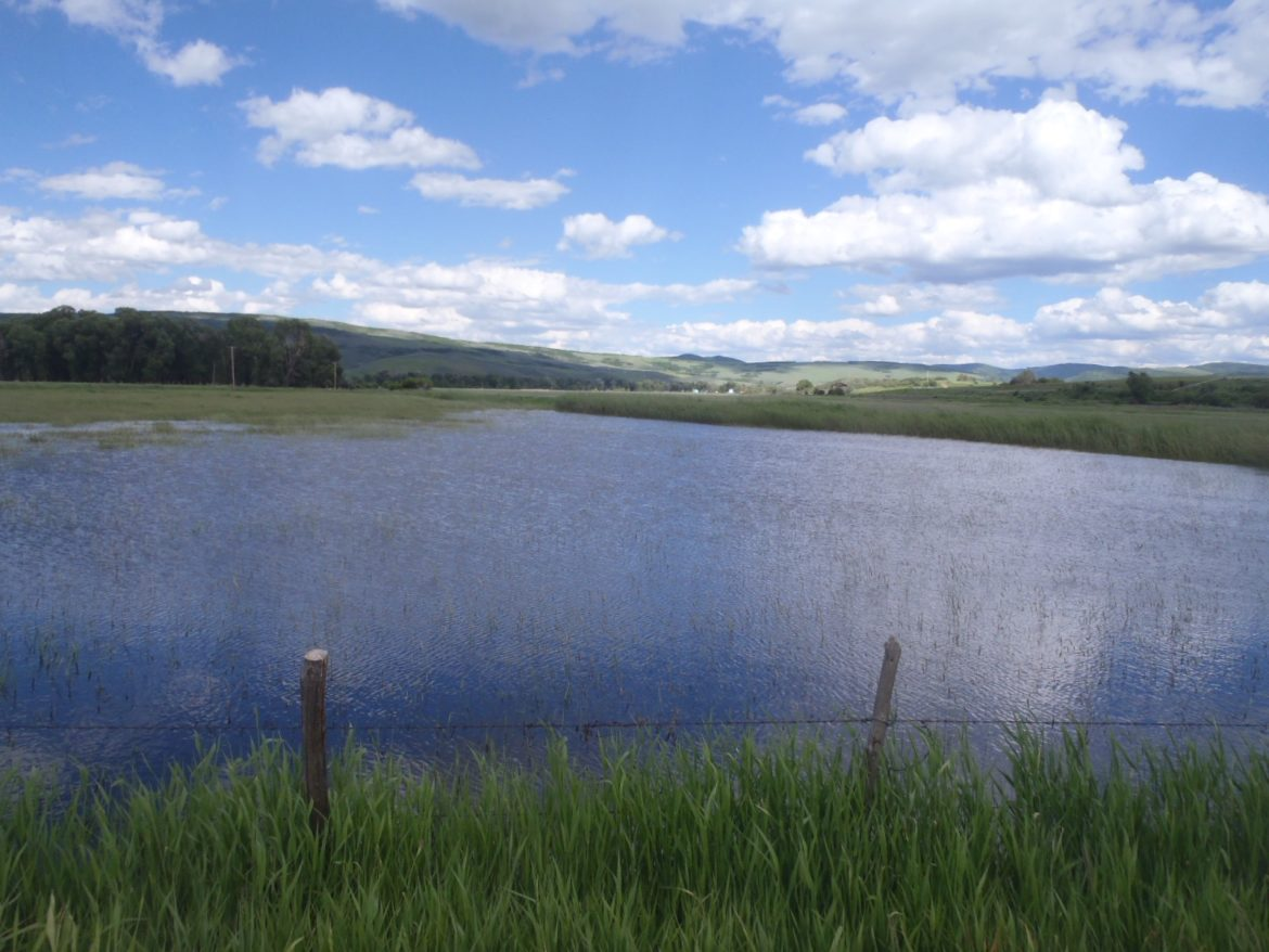 A field flooded with water from the Yampa RIver this year. Erin Light, the division engineer for Div. 6, said this is an example of diverting more water than is necessary.