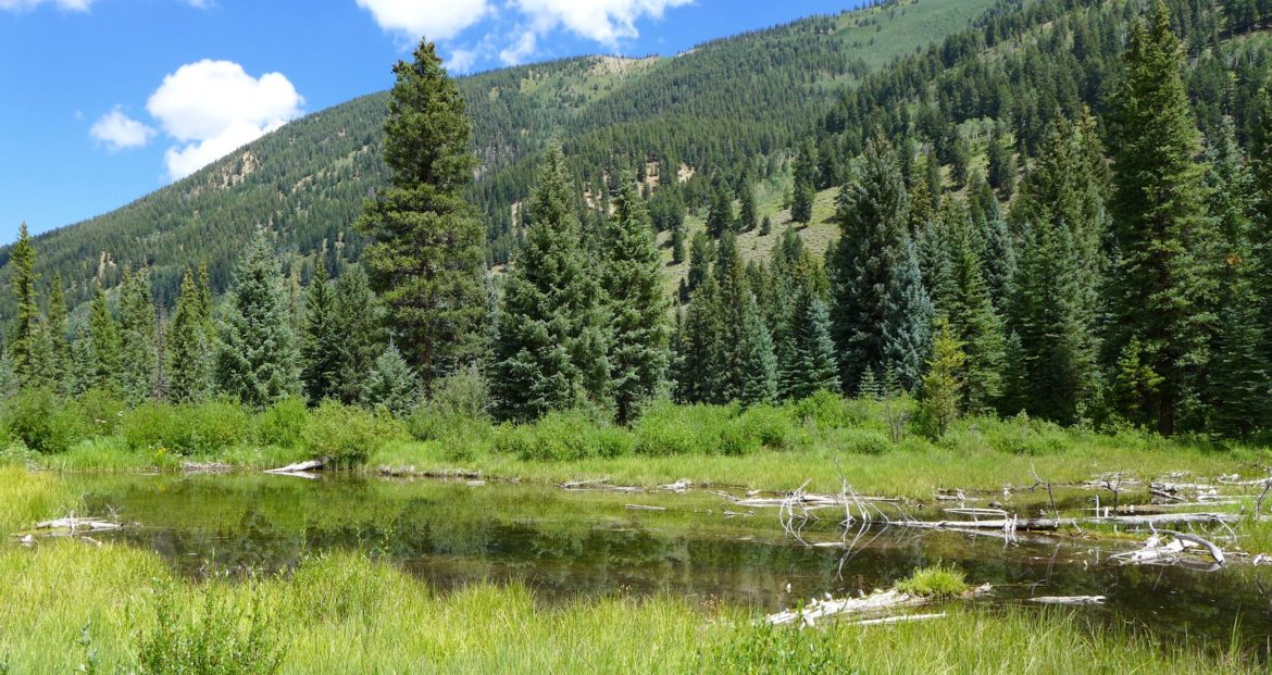 A view looking down the Castle Creek valley at one of the many wetlands that would be covered by the potential Castle Creek Reservoir. The city of Aspen has told the state it intends to build - at some point - a 170-foot-tall dam that would stretch about 1,000 feet across the Castle Creek valley and back up 9,062 acre-feet of water, inundating 112 acres of public and private land.