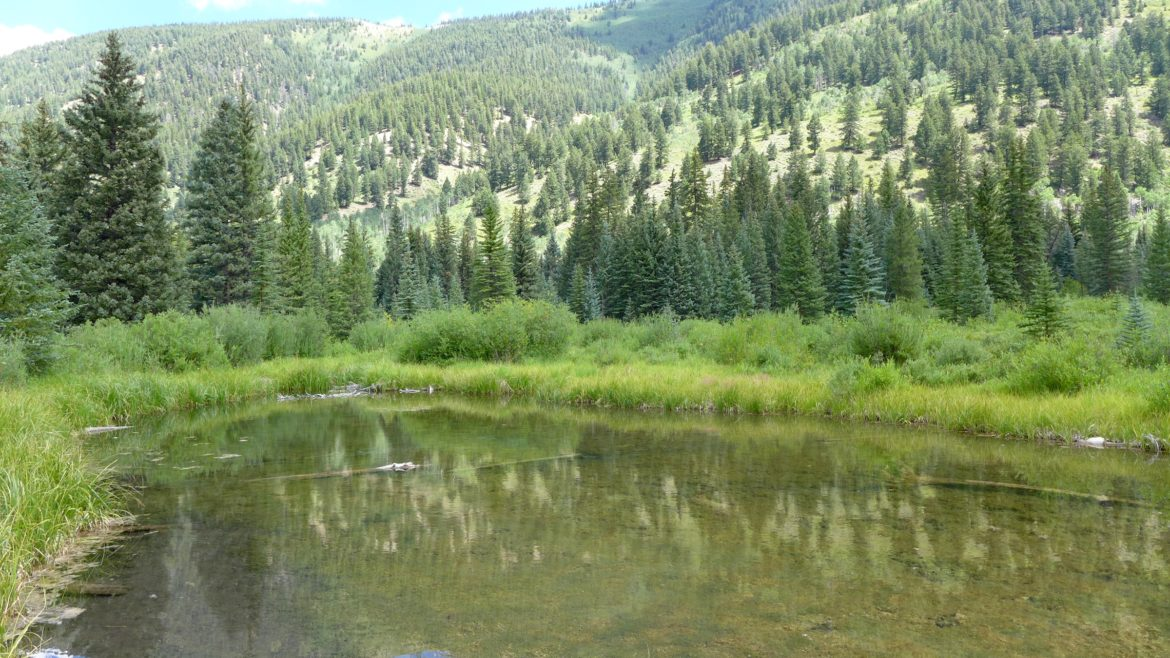 A view of one of the many wetlands in the Castle Creek valley that would be flooded by a potential Castle Creek Reservoir. The U.S. Forest Service has advised the city of Aspen that its potential reservoirs would conflict with management plans for the White River National Forest.