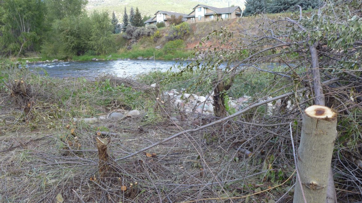 As of Aug. 3, construction staging had begun and riverside vegetation had been cut as the first steps toward building a cofferdam across the Roaring Fork River. The river will be directed into a pipe during the duration of the in-channel work.