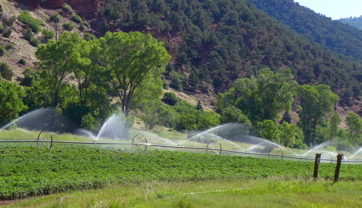 This field in lower Woody Creek is irrigated with water that eventually flows into the Colorado River. The state of Colorado is exploring how to fund a program that would pay irrigators to reduce their consumptive use in order to send water downstream to a savings account in Lake Powell. Photo by Brent Gardner-Smith/Aspen Journalism.